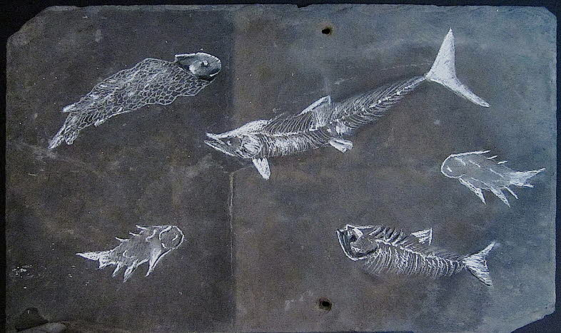 Devonian fishes, 390 mya. The Devonian is often described as the era of fishes